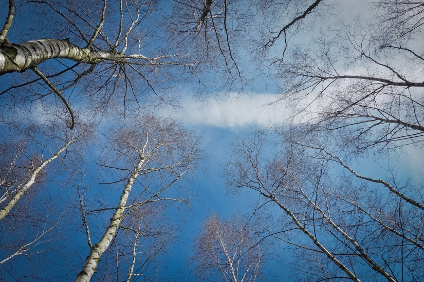 trees-3280806_1920